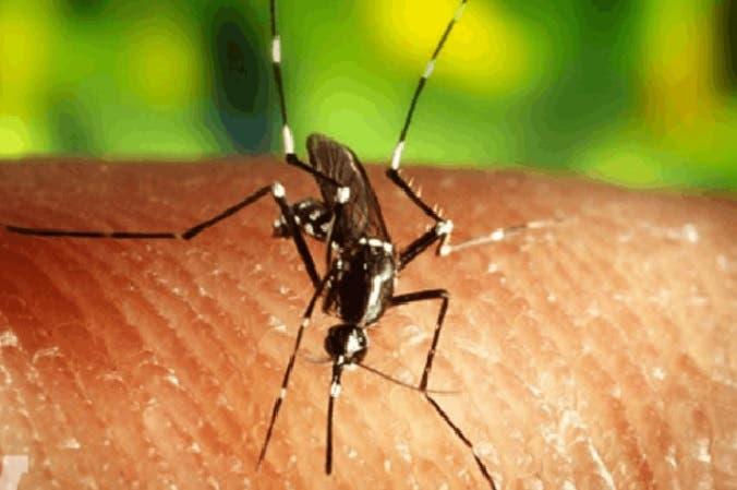 Mosquito zika