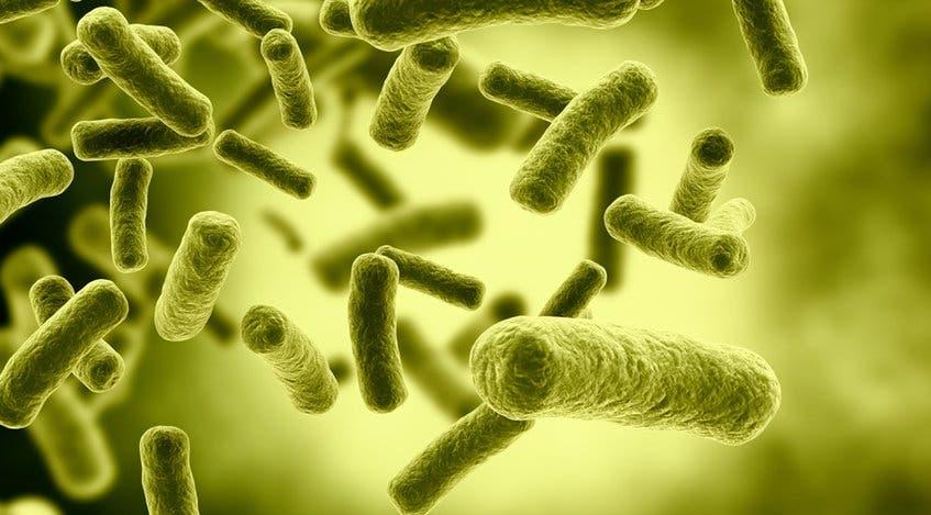 Científicos de Harvard muestran la resistencia de bacterias a antibióticos
