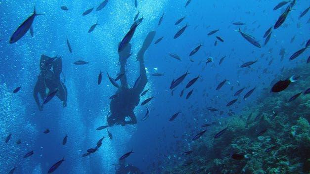 8 de junio: ¿Qué sabes del Día Mundial de los Océanos?