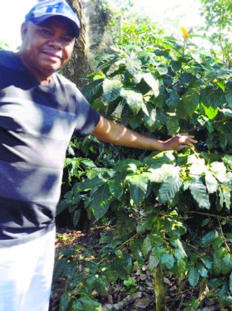 Desde próximo año Codocafé tendrá semillas para programa