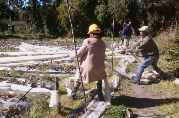 Valle Nuevo: Hoy continúa desmonte; ministro Medio Ambiente reitera no permitirá actividad agrícola