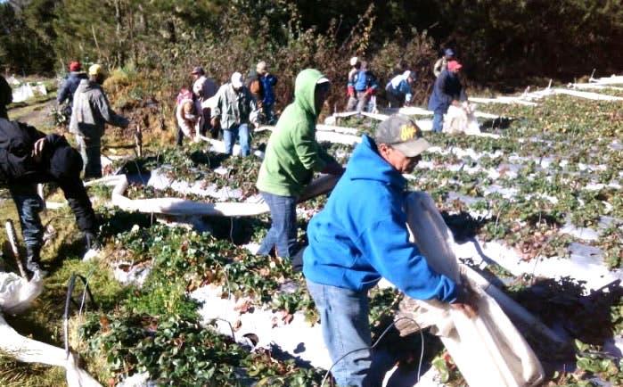 Proceso de desmonte en Valle Nuevo inicia con las mayores extensiones de terreno