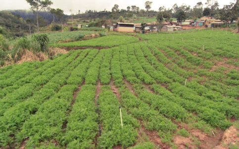 Codia apoya desalojo en Valle Nuevo; dice 70% ríos se seca
