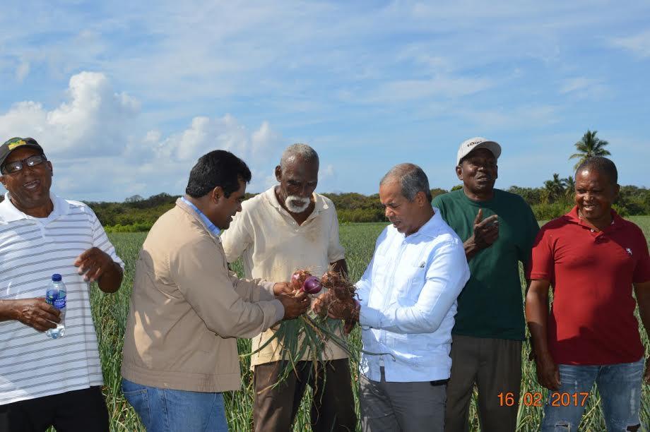 El FEDA financia con 23 millones de pesos a productores de cebolla de San Cristobal y Baní