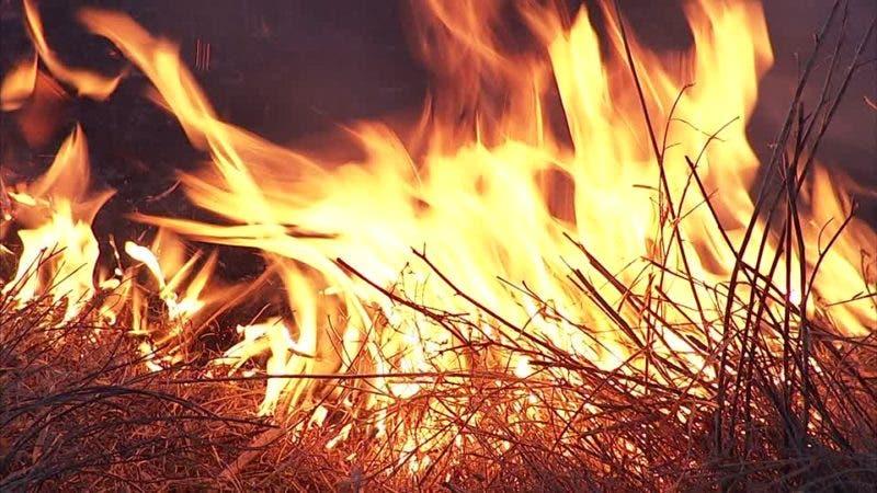349551868-buschbrand-buschland-ausgebrannt-brandkatastrofe
