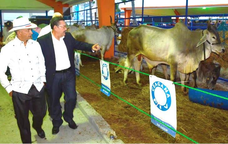 CEA asistirá a productores para lograr ganado de alto rendimiento