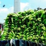 Los plátanos verdes, las papas y arroz subieron de precios en marzo