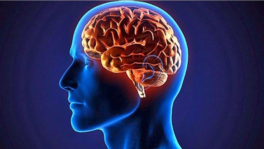 """Desarrollan una herramienta para regular el """"cerebro"""" del sistema inmune"""