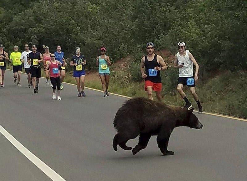 Un oso se atraviesa en una carrera en Colorado