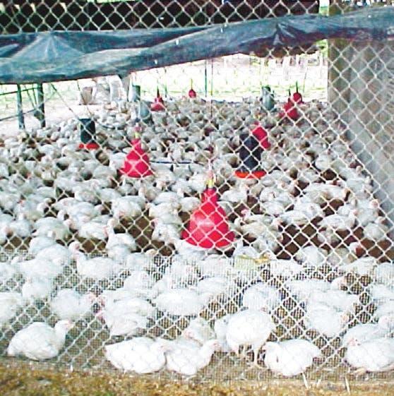 Pide a avicultores presentar caso afecta