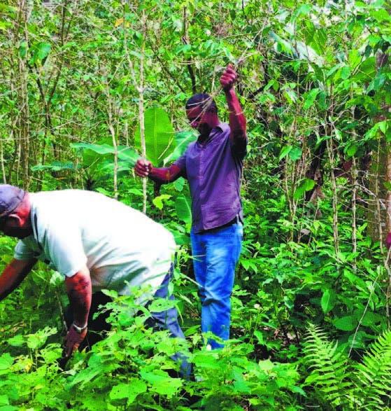Senador urge obras Duarte y leyes agropecuarias