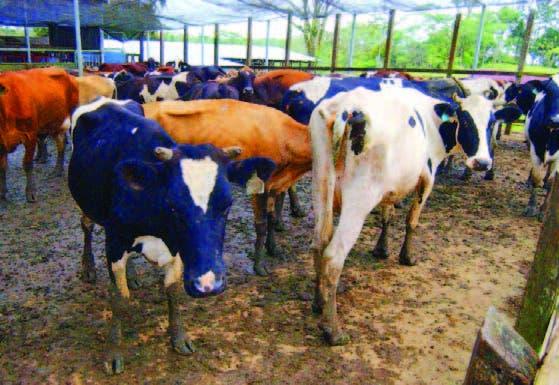 Ganaderos destacan que se han incrementado la producción de leche