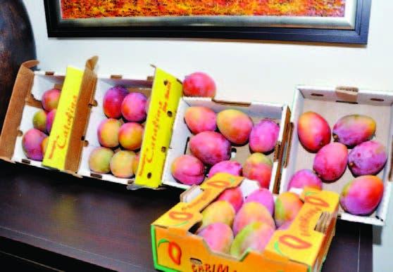 Las exportaciones de mango fueron afectadas por la veda