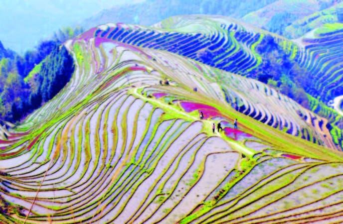 Las terrazas de arroz vistas desde la cumbre. Desde esta perspectiva se aprecia el enorme trabajo de transformación de las montañas realizado durante sig l o s .