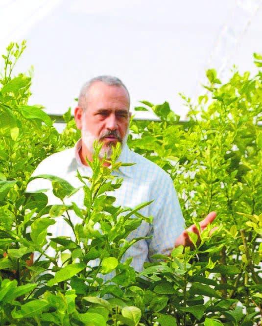 El Idiaf tiene yemas masificar producción plantas de cítricos