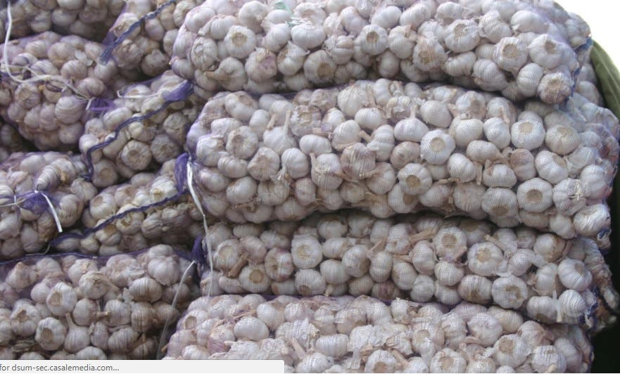 Bolsa Agroempresarial niega alza en precio del ajo sea por permisos de importación