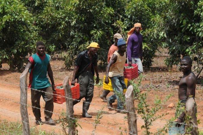 la-debacle-de-la-agricultura-haitiana