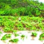 Productores piden lo incluyan en programa para desastres agrícolas.