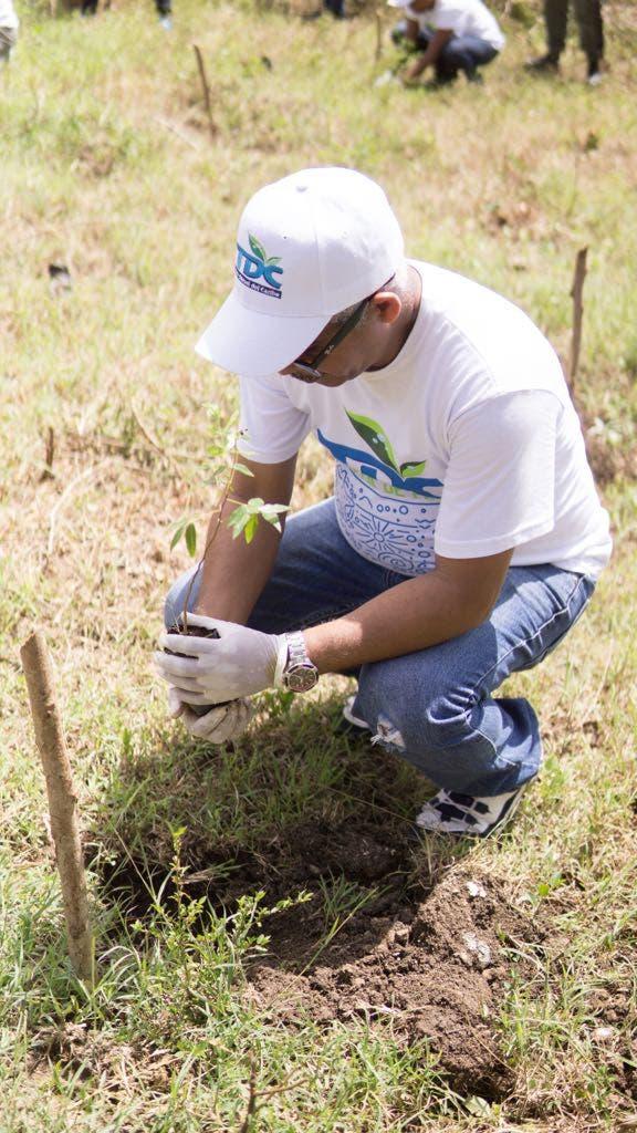 Siembra más de dos mil plantas de caoba
