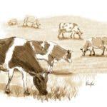 Producción y conservación de los pastos y el uso de razas tropicalizadas