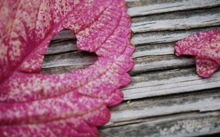 love-leaf-heart-wallpapers-1024x640