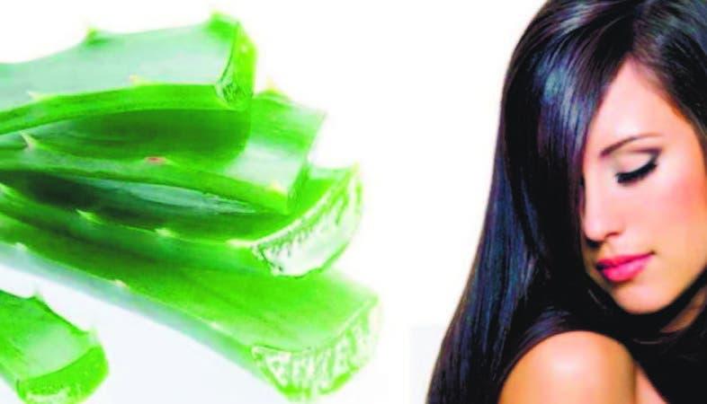 remedios caseros para la caida del cabello sabila