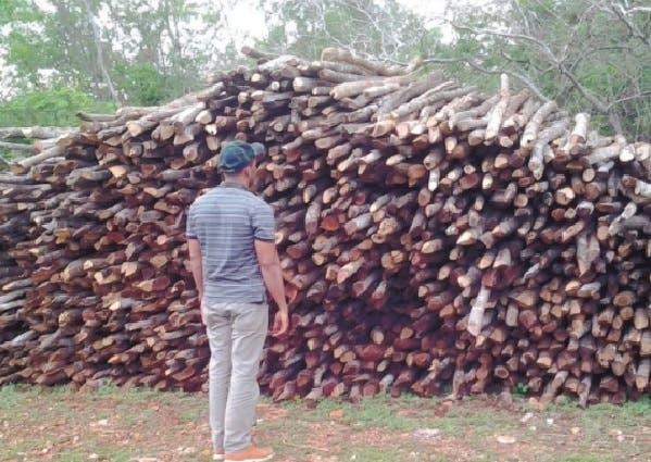 Presidente AEIH: Depredación bosques ocurre ante mirada indiferente de autoridades