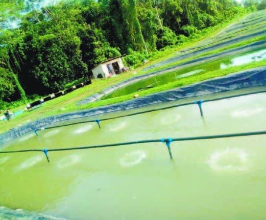 Vuelve el auge de la producción de peces en el país.