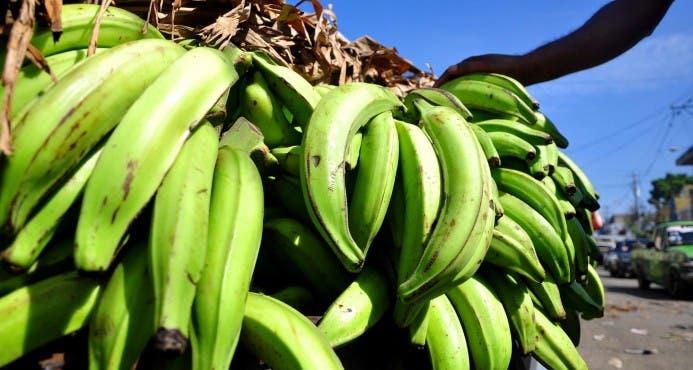 FEDA anuncia semana del consumo de plátano en parqueo del Banco Agrícola