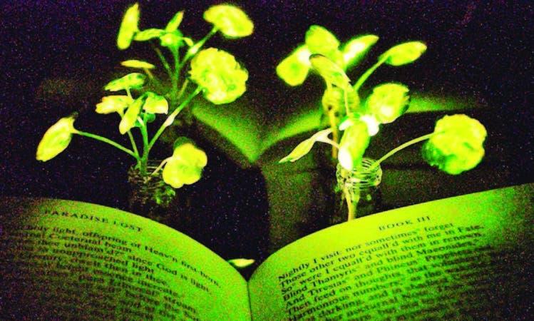"""Páginas del libro """"el paraíso perdido' de John Milton, iluminadas por la luz emitida por plantas nanobiónicas."""