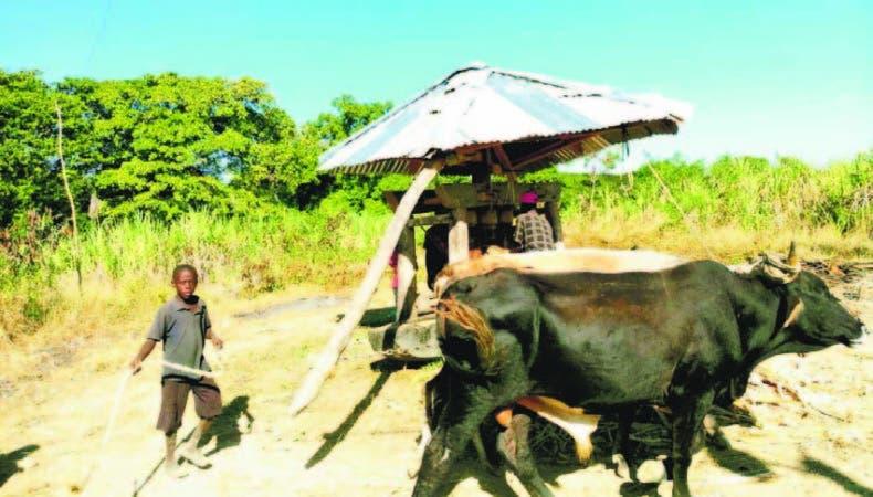 Un trapiche donde se elabora clerén, en un poblado haitiano cercano a Elías Piña