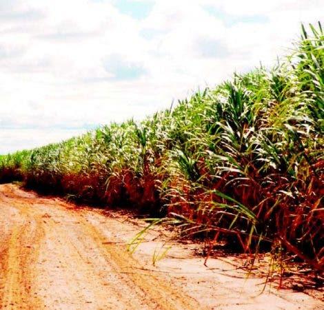 Brasil puede apoyar al país en producción de etanol.