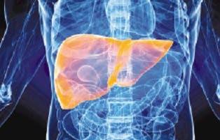 Descubren una nueva proteína para luchar con cáncer hígado