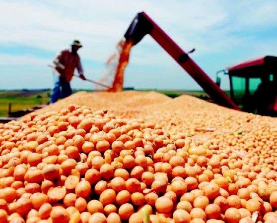 La caída en la producción determinará una reducción del 21%.