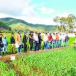 Productores de ajo de Constanza reciben explicaciones del Idiaf.