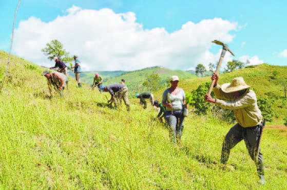 Los obreros mientras hacen tareas de reforestación