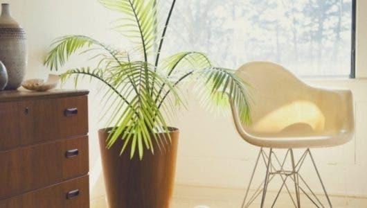 Plantas que refrescan los ambientes