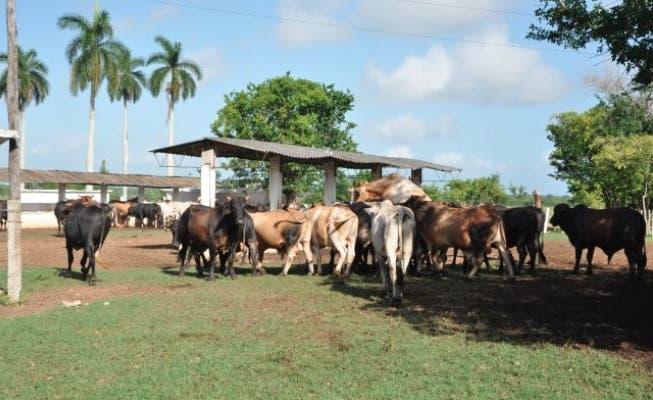Más de 30 productores denuncian azote de cuatreros en municipio de Guerra
