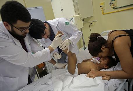 Un vistazo al zika y su conexión con la microcefalia