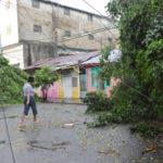 Dos árboles se desplomaron en Villa Juana. Hoy/ Napoleón Marte