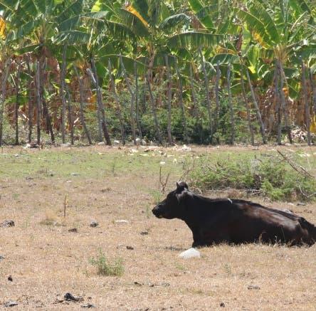 Recorrido por la zona sur del país. Por la sequía que afecta el ganado y los ríos. Evaristo Rubens  22-3-13  Foto: Armando Trabou