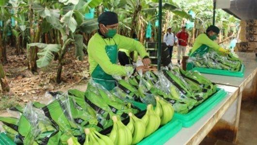 Bananeros Noroeste al borde  quiebra, piden ayuda Medina