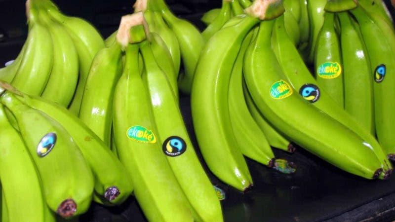 Firma de acuerdo entre IDIAF y la FAO, Banano. Hoy/ Fuente externa 29/07/2010