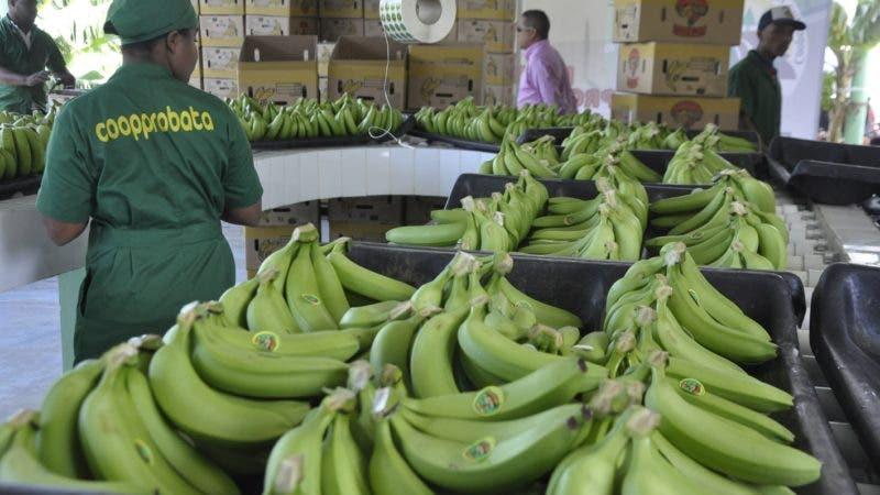 El pais. Rafael Carderon senador de Azua, en la Inaururación oficina del proyecto de procesamiento y empaque  de Banano Organico, para la Exportación Plan de Negocio de la de la Cooperativa Agricola Los Tainos, COOPPROBATA.Hoy/Pablo Matos  11-06-2015