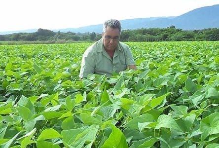 Un técnico del IDIAF supervisa una plantación de habichuela.