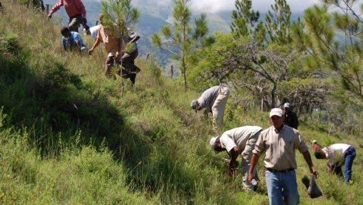 Propone plan nacional reforestación  lo ejecuten los ganaderos y Gobierno