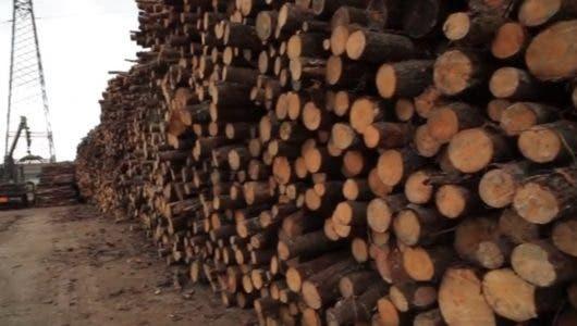 República Dominicana enciende motores del desarrollo limpio con la biomasa como combustible del futuro