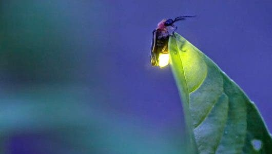 Luz Centelleante