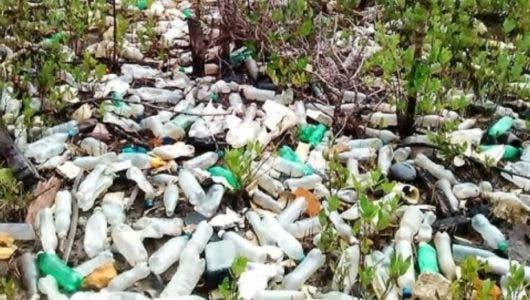 Medio Ambiente junto a otras entidades retira desechos de manglares de Luperón