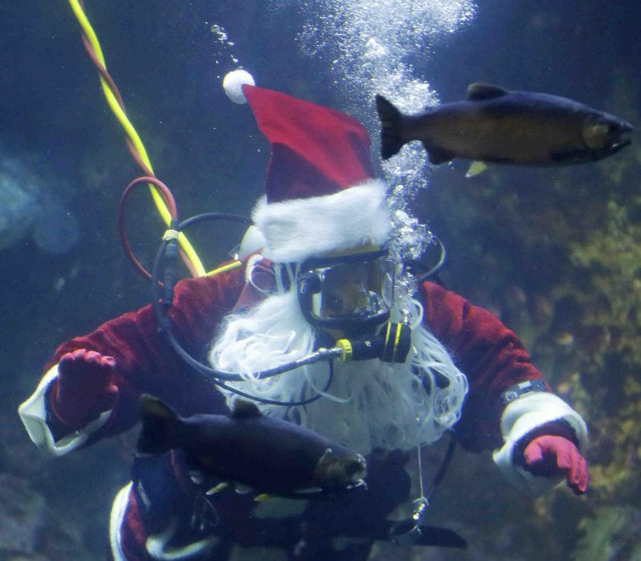 Santa Claus acuático sorprende a visitantes de zoológico en México